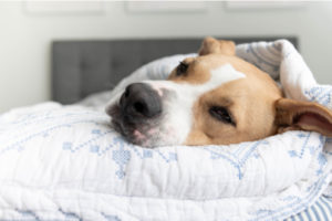 Ways To Help Your Dog Sleep Every Night